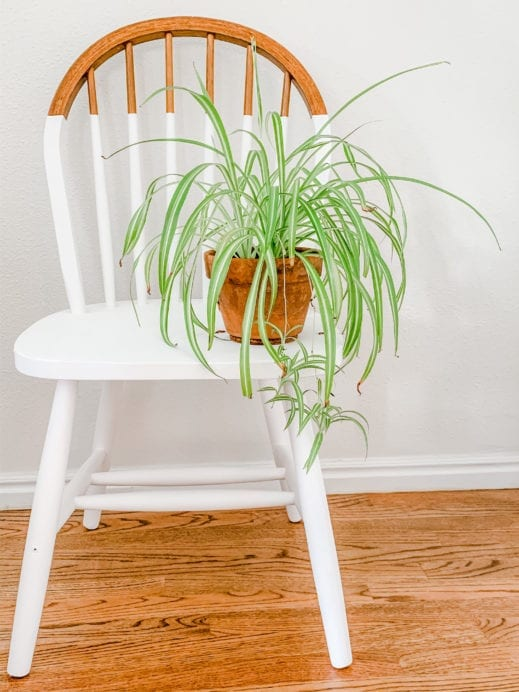 Partially painted white chair with small plant on the seat